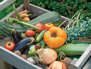 gardens_vegetables_box
