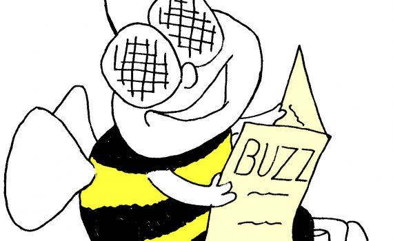 solway-buzz