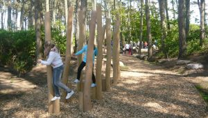woodland play area 2